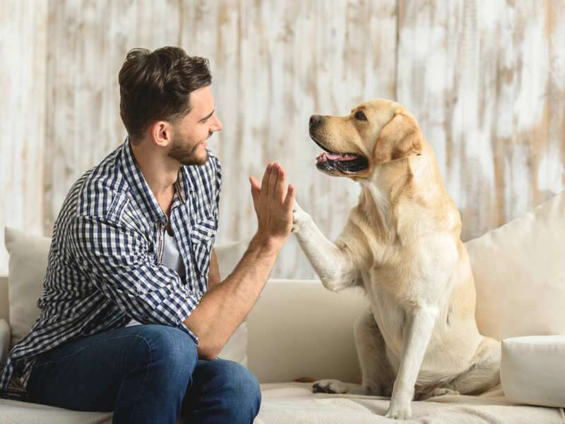 9 best things to teach your dogs daily