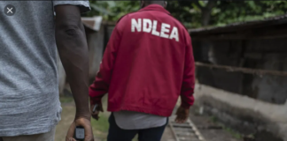 NDLEA nabs man with two human heads in Ondo